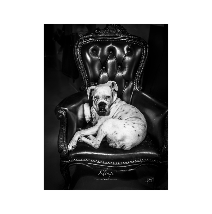 Kling dog sitting in his throne